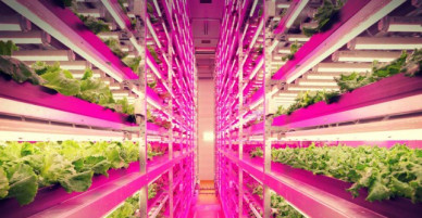 Japan is preparing to open the world's first robot-controlled farm